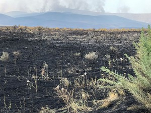 The land charred around Rattlesnake Mountain from the July 2019 Cold Creek Fire includes sensitive habitat for numerous plant and animal species.