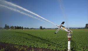 File photo of a farm in Marion County, Oregon. Land use groups and individuals argue that prime farmland is irreplaceable and too precious to develop.