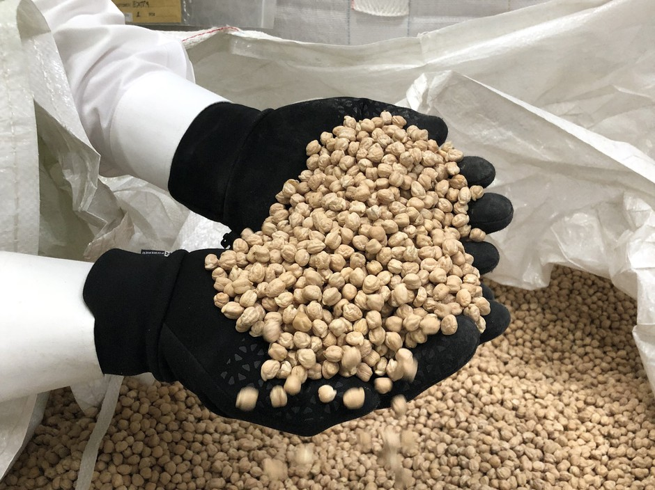 Dry garbanzo beans spill between Phil Hinrichs' fingers. Hinrichs Trading Co. readies chickpeas for hundreds of products on domestic store shelves and exports the commodity in bulk across the globe.