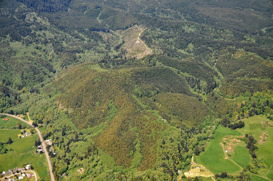 Aerial surveys show the fungal disease Swiss needle cast is now infecting more than four times the forestland it did 20 years ago.