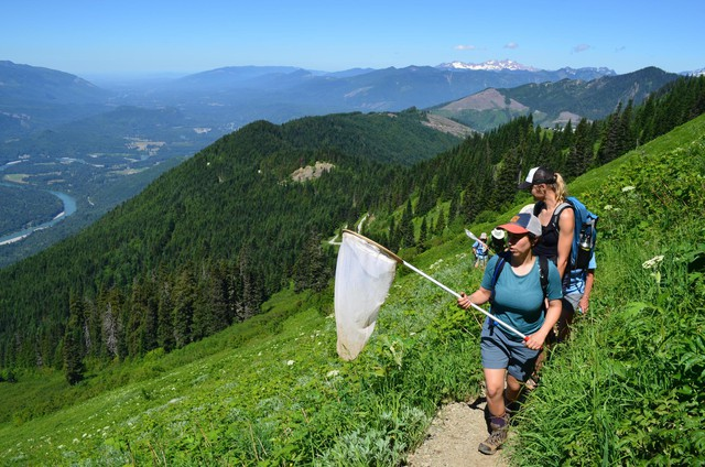 Hikers count butterflies on Sauk Mountain in the North Cascades.