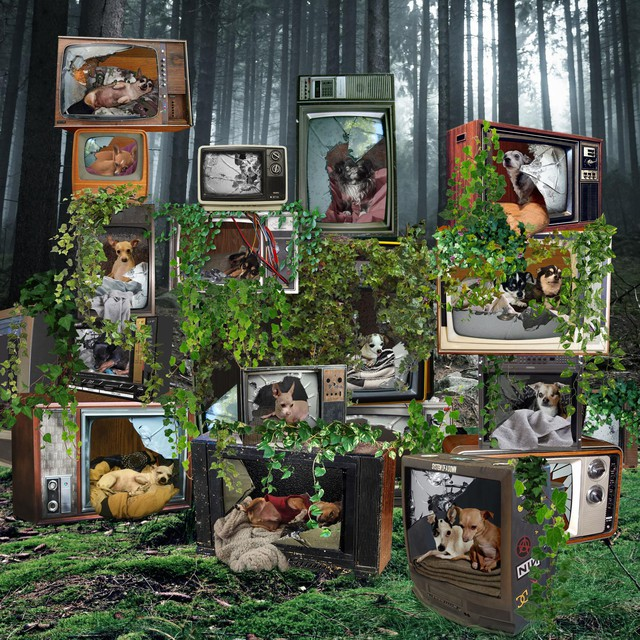 "In addition to gathering documentary footage at Chernobyl, Julia Oldham gathered photos for constructed collages, inspired by dogs in the exclusion zone. ""I thought it was an interesting way of approaching really scary issues, to create an idealized post-human world full of dogs."""