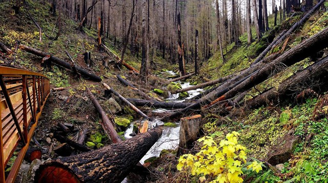 Popular trails in the Columbia River Gorge recently reopened for the first time since the Eagle Creek Fire in September 2017.