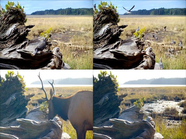 """Malia Jensen's """"Nearer Nature: Worth Your Salt"""" structures some 27.000 video clips into a six-hour loop, on view at a dozen sites across Oregon."""