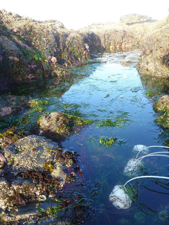 Ocean acidification sensors in rock pools.