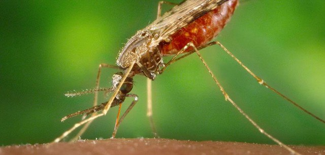 Malaria is spread by mosquitos. They bite someone, and in the process pass on the parasite that carries the disease. More than 300 million people suffer from it each year. One million die — mostly children and mostly in Sub-Saharan Africa.
