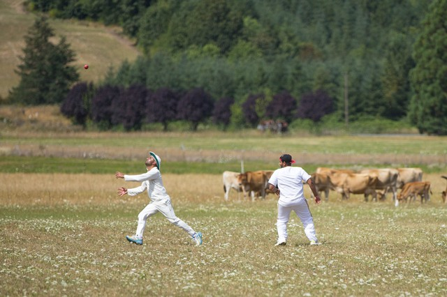 Sumeet Batish chases a fly ball while cattle graze beyond the fence. Players say the cows don't seem to mind the action on the field.