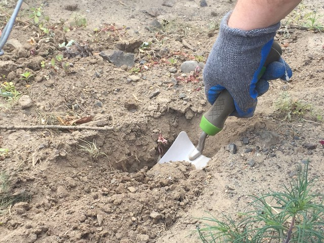 EarthFix reporters took soil samples from 30 properties and had them tested. Samples from 16 of those properties showed arsenic or lead above Washington's cleanup threshold.