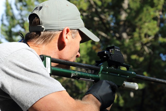 Curtis Hendricks, Idaho Department of Fish and Game regional wildlife manager, aims a dart gun loaded with a tranquilizer at a 300-pound grizzly bear less than 20 yards away.