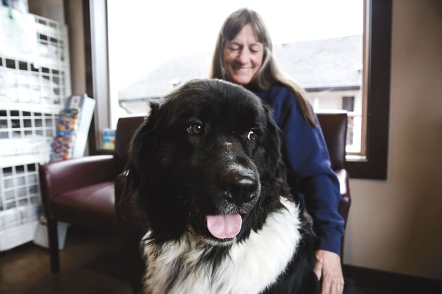 In this Thursday, Nov. 9, 2017, photo, Tank, a Newfoundland, sits with his owner, Jill Lienert, at West Ridge Animal Hospital in Klamath Falls, Oregon. Tank is part of a canine stem cell trial study for arthritis at West Ridge Animal Hospital, one of only two veterinaries on the west coast that are participating in the study.