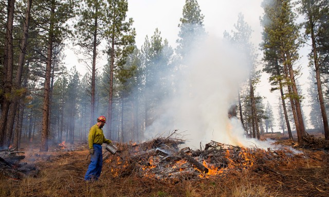 This Nov. 7, 2013, photo provided by the Deschutes Collaborative Forest Project shows an unidentified worker burning a pile of collected undergrowth in the Deschutes National Forest in central Oregon. The thinning of forests in central Oregon has saved homes amid one of the most devastating wildfire seasons in the American West.