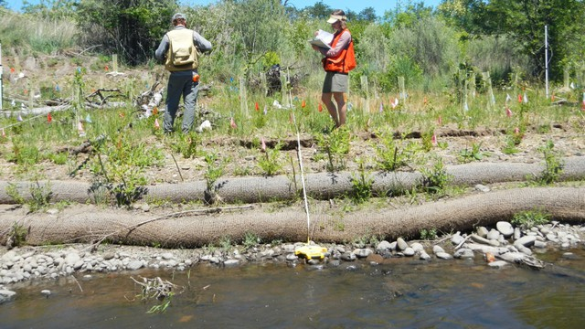 Restoration professionals collect baseline data on existing and planted vegetation on a tributary of the Rogue River. As part of the credit system, planted trees will be monitored for 20 years.