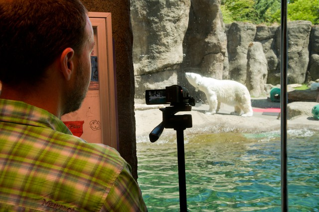 By collecting visual and digital data on a polar bear named Tasul at the Oregon Zoo, USGS researchers hope to be able to study how climate change is affecting wild polar bear behavior in the arctic.