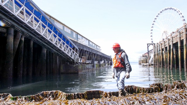 University of Washington Research Scientist Jeff Cordell is overseeing the construction of a salmon-friendly seawall at Seattle's waterfront.