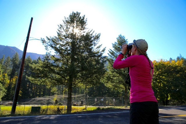 Johanna Varner stops at a roadside in Cascade Locks trying to get a view of her pika research sites in the Columbia River Gorge.
