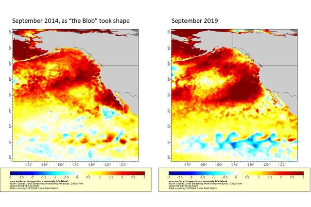 """This map of sea surface temperatures illustrates the new marine heatwave off the West Coast as compared with """"the blob"""" of 2014-15. Darker red denotes temperatures farther above average. The highest temperatures shown are more than 5 degrees Fahrenheit above average."""