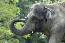 Rama is being treated for TB, zoo officials said.