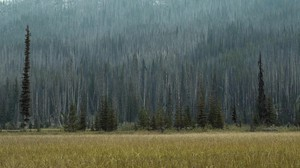 As trees encroach on wetland meadows, they act like giant wooden straws, drying up the meadow as they suck up water. Fire helps keep meadows wet.