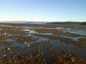 Low tide at Portage Bay in Washington's Whatcom County.