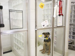 Three-year-old German shepherd mix Memphis sits in a kennel at the Marion County Dog Shelter Tuesday, Aug. 8, 2017.