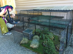 Stanley Held built his catio using tent stakes, cable ties and metal mesh squares often sold as shelving for dormitories.