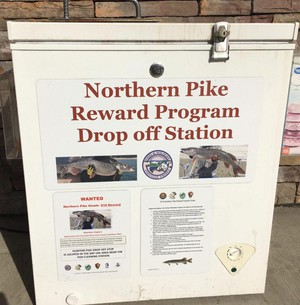 A northern pike dropoff station at the Tribal Trails gas station near Kettle Falls, Wash.