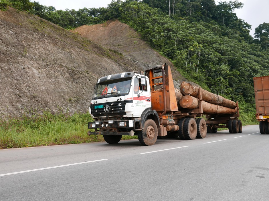 A truckload of tropical hardwood from westCentral Africa called okoume. It's at the center of an environmental watchdog group's investigation into illegal logging and corruption.