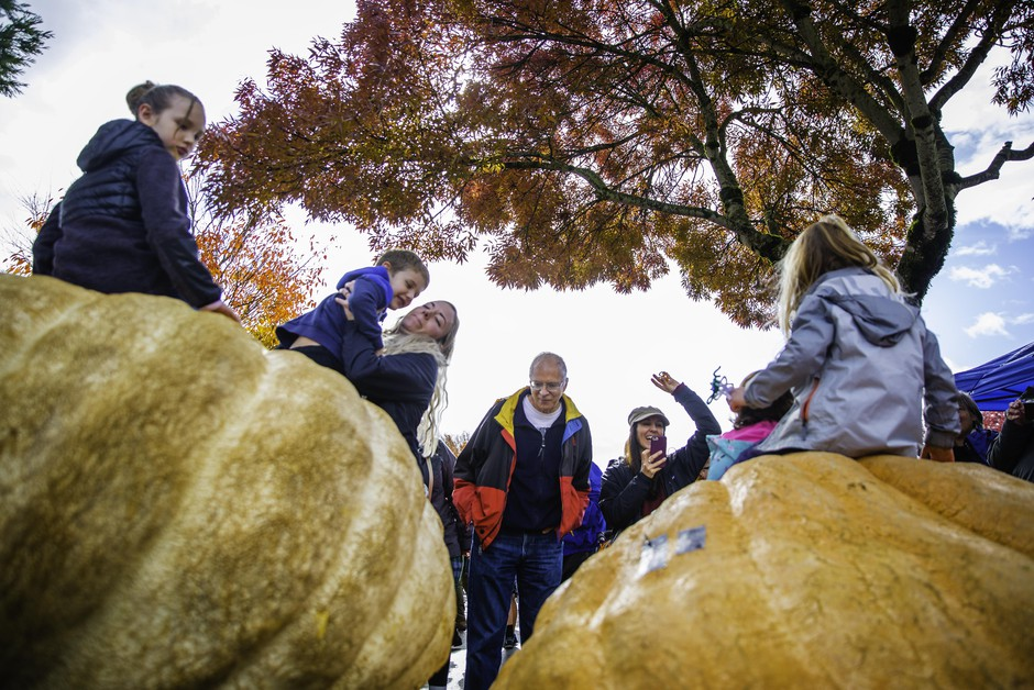 The Pacific Giant Vegetable Growers competed during the weigh-in of their massive pumpkins. Attendees climbed on top of the largest pumpkins that weighed up to 1800 pounds.