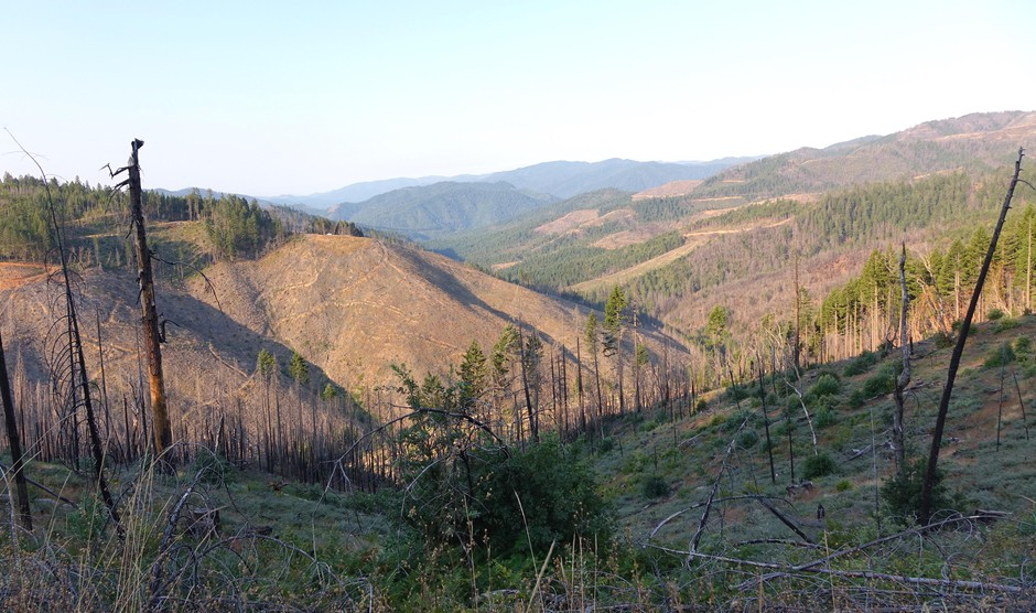 "O&C Lands ""checkerboard"" in southwest Oregon four years after the Douglas Complex Fire."