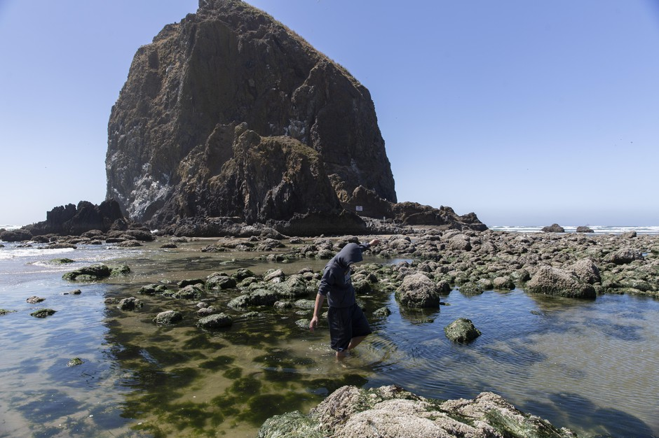 While shufflingthrough the tide pool in front of Haystack Rock in Cannon Beach, a young man spotsa mole crab in the sand.