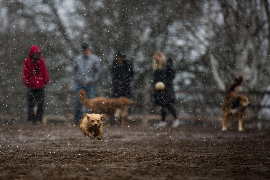 A dog named Lucy chases a ball in the Willamette Park dog park in southeast Portland, Ore., Saturday, Feb. 9, 2019. Snow hit the metro area in varying levels over the weekend and is likely to create slippery conditions into the start of the week.