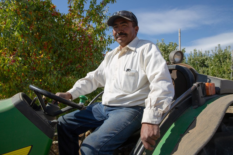 Vilmer Alcantar drives a tractor hauling bins of Granny Smith apples at Avalon Orchards' farm in Sundale, Wash., Monday, Oct. 7, 2019. Alcantar is the foreman here and has worked for Avalon Orchards since 1983.