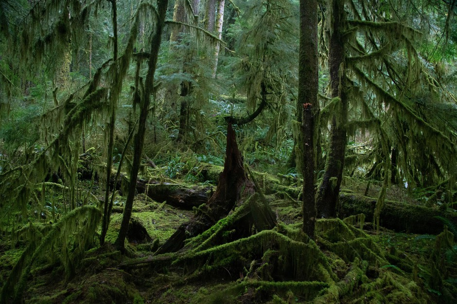 Falls City is the gateway to the Valley of the Giants, above, a federal forest preserve with trees draped in neon moss.