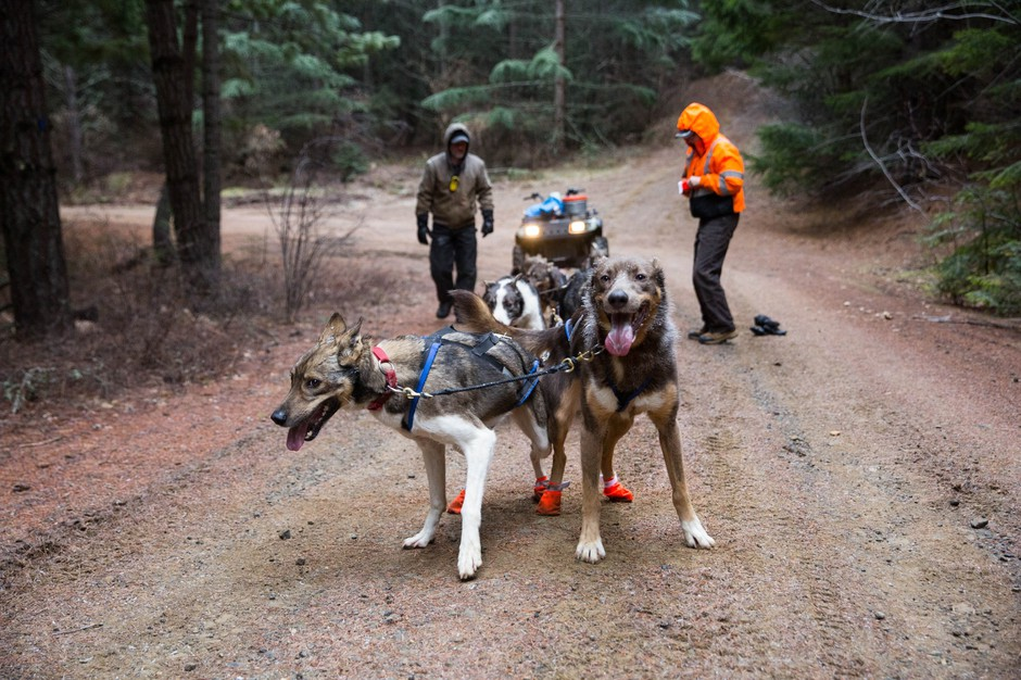 How To Train Sled Dogs To Pull A Sled