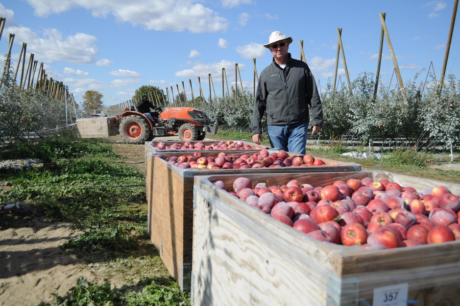 Though Cosmic Crisp has been in development for over 20 years, growers are adjusting to growing this apple in their own orchards and taking extra steps to protect their investment. Price Cold Storage sprayed their apples with clay to prevent sunburn, though vice president Aaron Clark says it likely wasn't necessary.