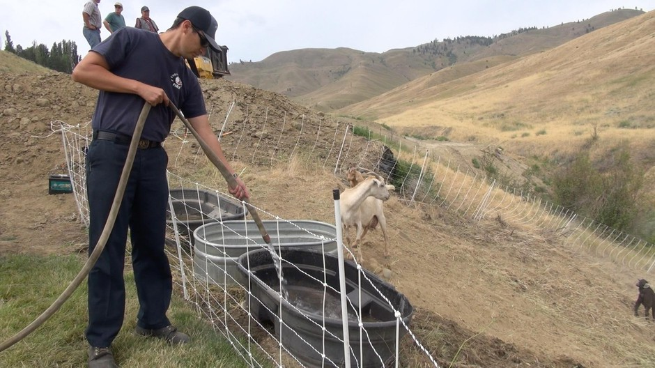 Firefighters brought water to the goats with their engines.
