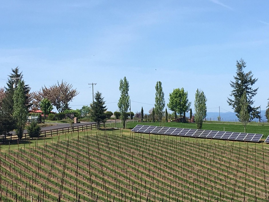 The farm at Alloro Vineyards is powered by solar energy from a 54-kilowatt array on the property.