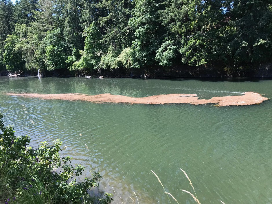 An algae bloom in the Dorena Reservoir prompted the Oregon Health Authority to issue a recreational health advisory Wednesday.