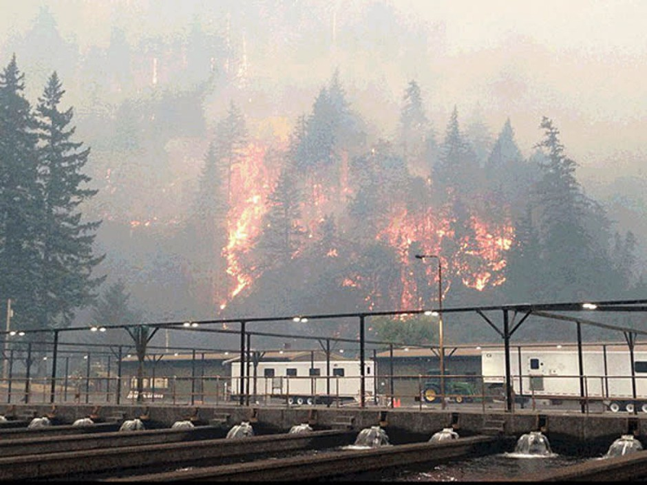 The Eagle Creek Fire as seen from the Cascade Locks Hatchery. To keep hatchery fall chinook from dying because of the fire, Oregon officials released them early.