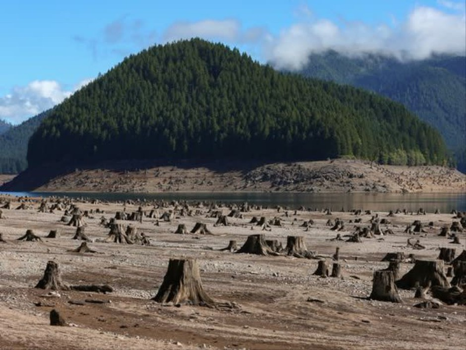 Old tree stumps are left exposed due to low water levels at Detroit Lake Friday, Sept. 18, 2015, in Detroit, Oregon.