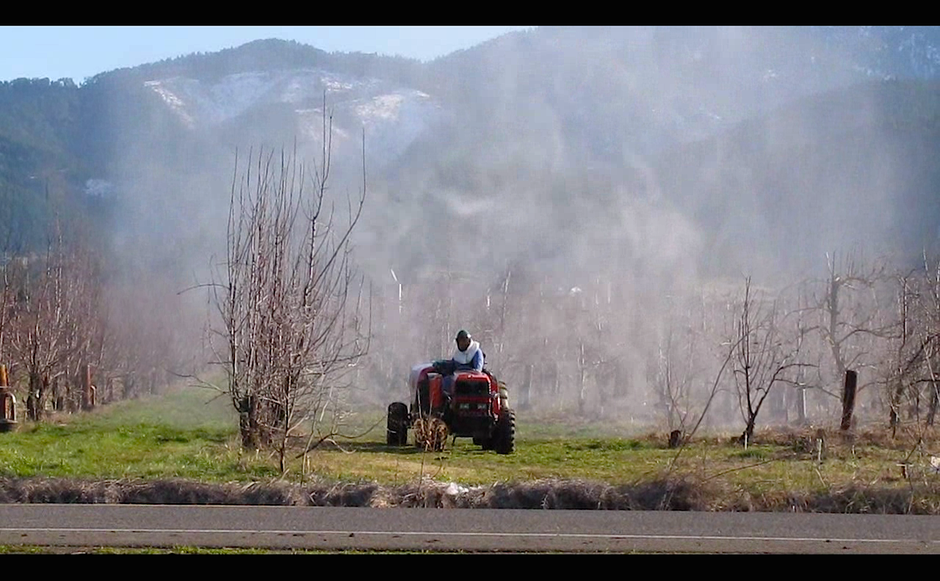 Cloud of pesticides surround pear orchard worker in the Rogue Valley. Farmworker advocates say this kind of spraying can cause pesticide drift.