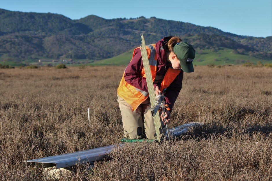 Tess Forstner (USGS) up the measuring tool as part of a study to determine the effect of sea level rise on coastal wetlands in the West.