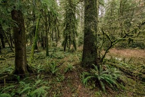 The Elliott State Forest near Coos Bay, Oregon, is on track to be removed from its ties to the Common School Fund.